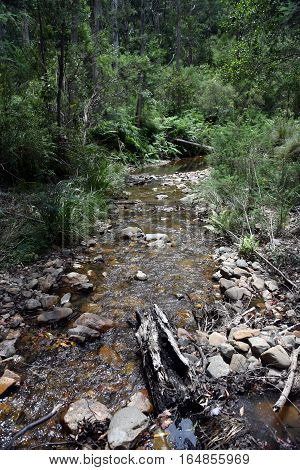 Creek with reeds and rocks in the forest. Creek in the Victoria's High Country in summertime.