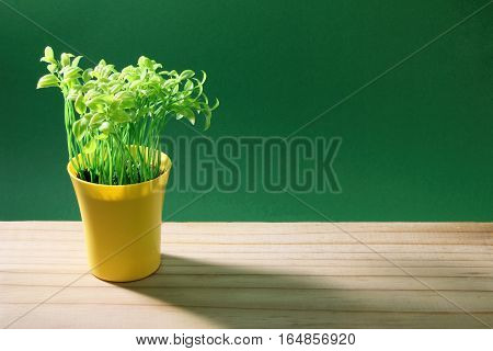 Pot Plant on Green and Wood Background