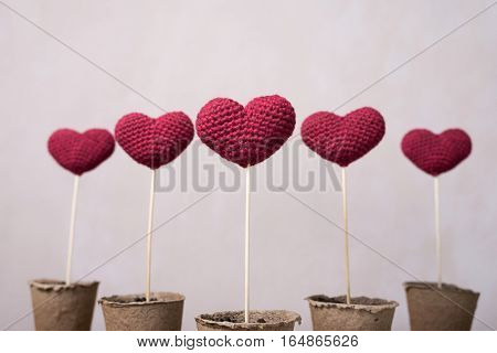 Crocheted hearts on wooden sticks in peat glasses with a focus on one of them.
