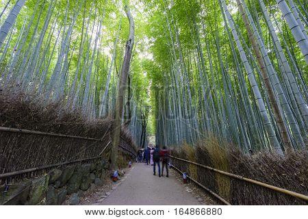 The Bamboo Road In Arashiyama