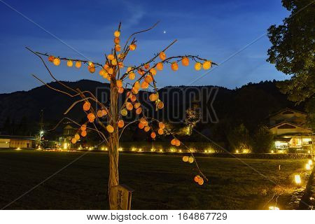 Persimmon Tree Light Up And Light Festival In Arashiyama Area