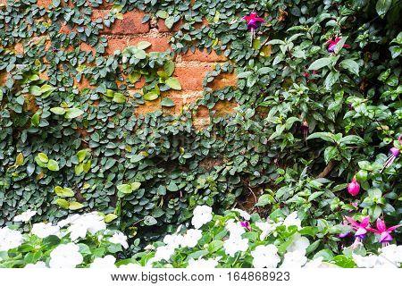 Creeper Plant On Brick Wall