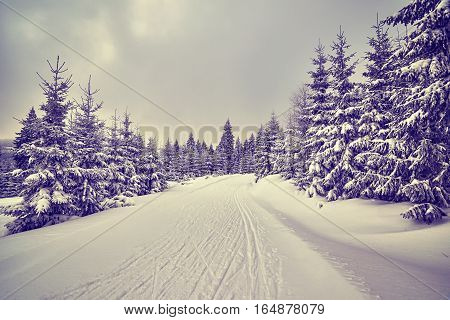 Purple Toned Winter Landscape With Cross-country Skiing Tracks