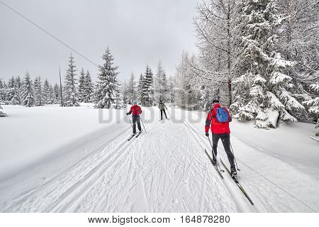 Jakuszyce, Poland - January 06, 2017: Cross-country Skiers Running On Prepared Tracks In Snow On A C