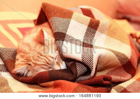 Ginger domestic cat sleeping on bed under plaid