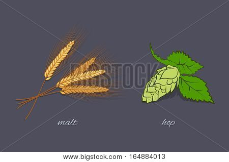 Vector isolated yellow malt and green  hop on dark grey background.