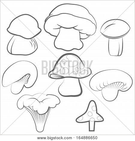 Compilation of vector illustrations of mushrooms collected in the forest