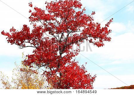 Trees And Leaves On Indian Summer, Quebec, Canada