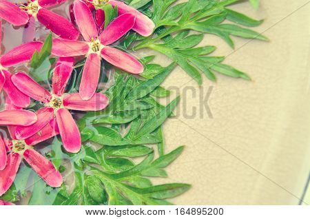 Rangoon Creeper pink flower and green leave background