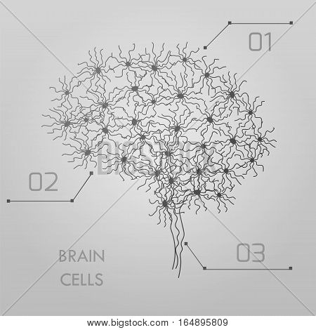 Brain cells connectome concept. Stock vector illustration of neurons forming a complex map for mind and thinking. Medicine and biology collection