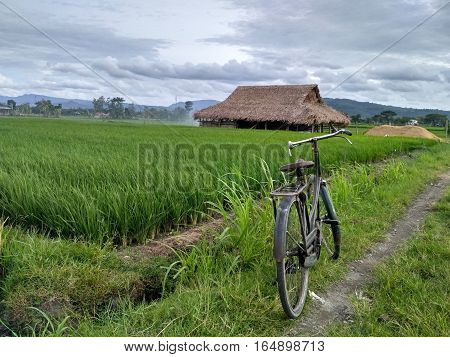 Agri culture in indonesian very big land
