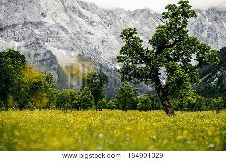 tirol mountain spring meadow outdoor flowers green