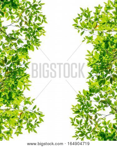Green leaves background with white background and copyspace