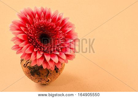 Card With Gerbera Flower In A Small Vase For Congratulations With A Blank Background