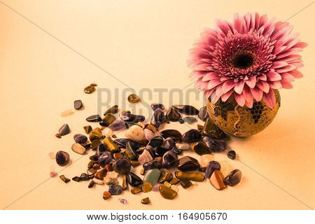 Card With Gerbera Flower In A Small Vase For Congratulations With A Blank Background And Scattering