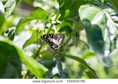 Butterfly on the green leaf. Abstract beautiful light from sunshine.