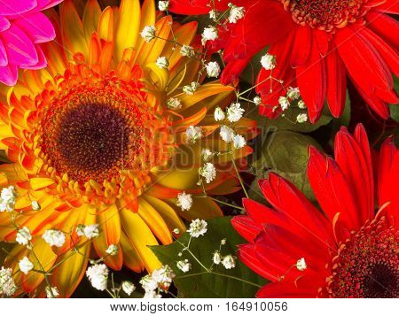 beautiful bright summer flowers bouquet of red orange gerbera with a dark center and white baby's breath flowers