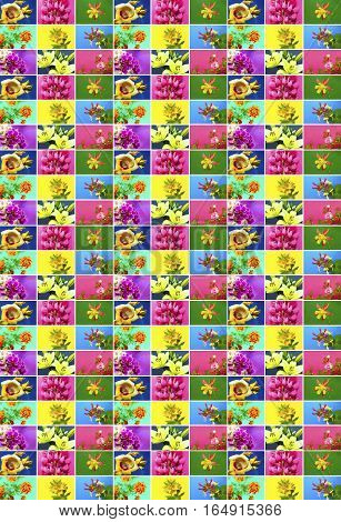 Colorful collage of flowers on different backgrounds in a large number.
