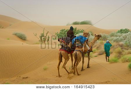 Camel caravan going through the sand dunes in desert Rajasthan India