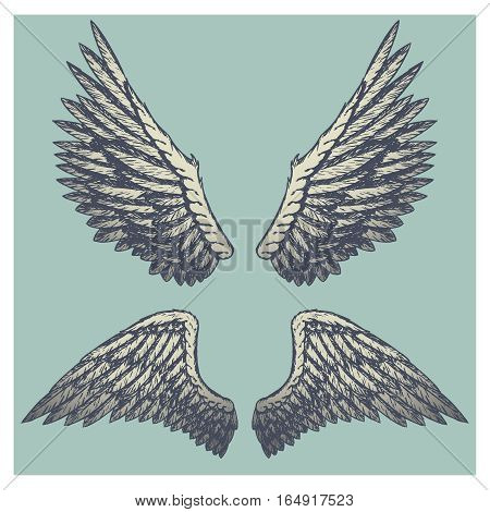 Hand drawn vector vintage illustration - naturalistic spread wings sketch.. Blue background.