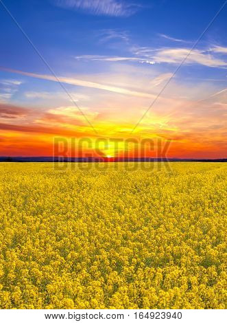 Beauty sunset over rape field, natural background