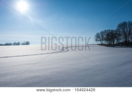 Beautiful landscape with grass and trees covered by snow. Cold day in the snowy winter forest. Toned.