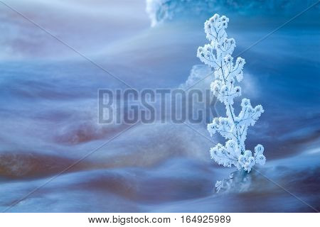 Single frozen plants in flowing winter stream