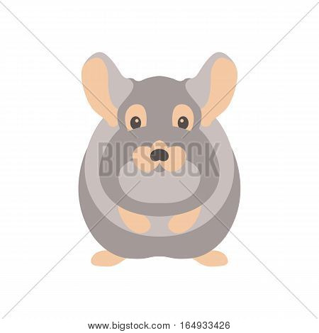 Chinchilla vector illustration style Flat side front