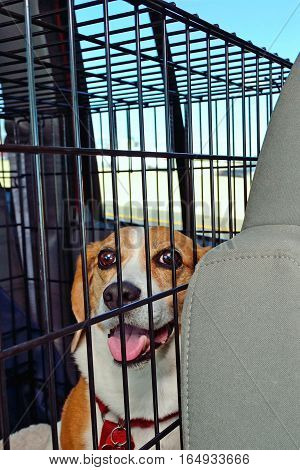 A happy beagle in a kennel while travelling inside a vehicle.