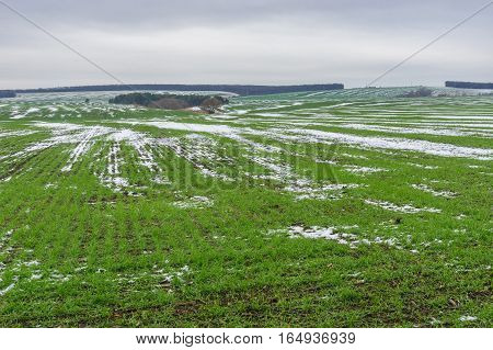 Agricultural fields with winter crops at late autumnal season in Ukraine