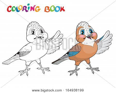 Coloring book with jay bird. Vector illustration.