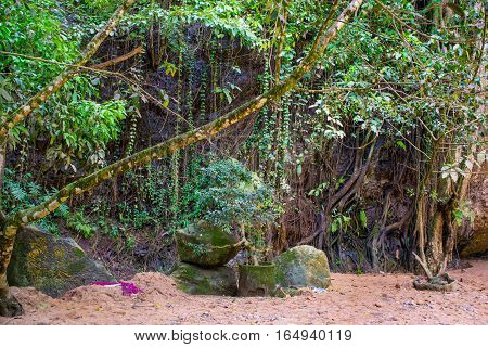Jungle forest trees in tropical Asia with bonsai