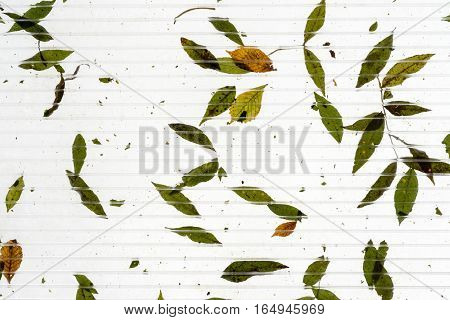 Leaves on a see through sun roof