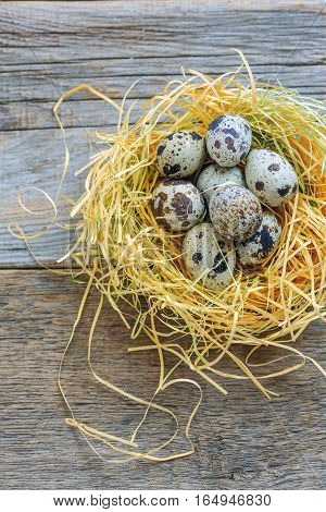 Colorful Quail Eggs In The Nest.