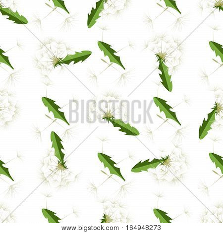 Vector illustration dandelions with leaves flower meadow. Summer flower natural season beautiful yellow dandelion. Dandelion vector seamless pattern blowing garden botany floral logo.