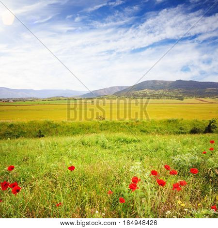 Scenic Summer Field With Green Grass And Red Poppies At The Background Of Mountains.