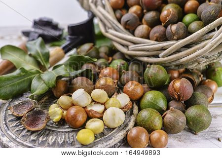 Macadamia in shell nuts harvest close up