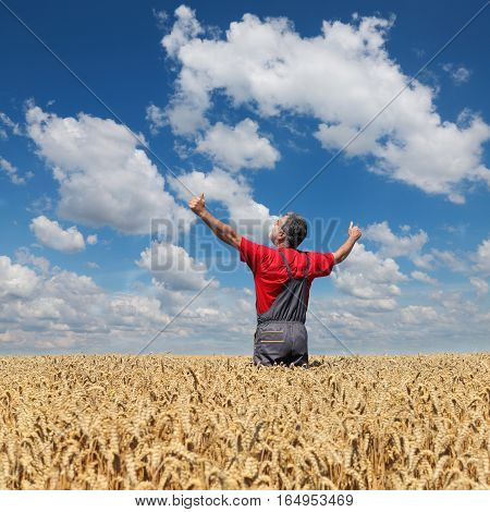 Agricultural Scene, Happy Farmer In Wheat Field
