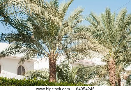 Palm. Palm leaf. Green leaf. Palm trees. Fashion travel summer vacation and tropical beach concept. Coconut palm trees beautiful tropical background