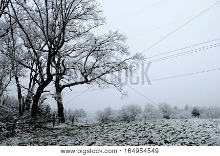 Snowy black trees with fence snow meadow and electricity lines.