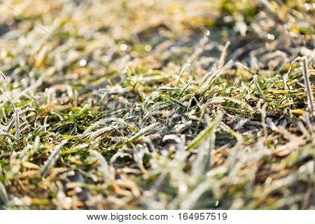 Hoarfrost On Grass In Winter