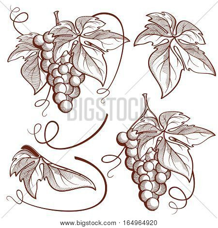 Graphic vector set on the grape theme. Grape thunderstorms, vine, leaf, tendril. Network established in the graphical style for the decoration of wine printing products.