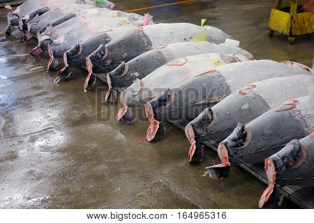 Tokyo, Japan - July 22, 2012: Frozen Tuna Are For  Auction At The Tsukiji Fish Market