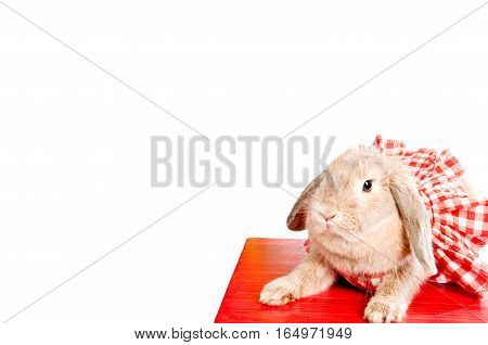 Pet. Decorative rabbit. Domestic rabbits. Rabbit. Rabbit in a pretty red dress. Easter concept. Copyspace. Bunny