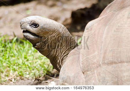 this is a close up of a tortoise