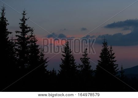 Sunrise in the mountains. Outlines of spruce tops and the sun's rays make their way through the clouds and mountains peaks. Spruce background. Coniferous forest