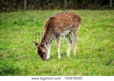 Monkey Forest - White-tailed Deer