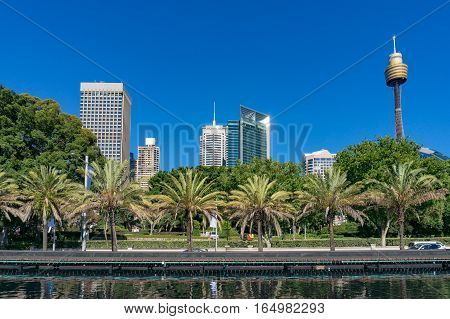 Sydney Skyline With Palm Trees On Foreground
