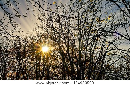The sun's rays through the leaves and branches