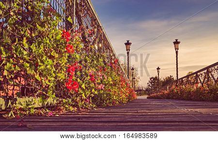 Autumn sunrise on the bridge with flowers.